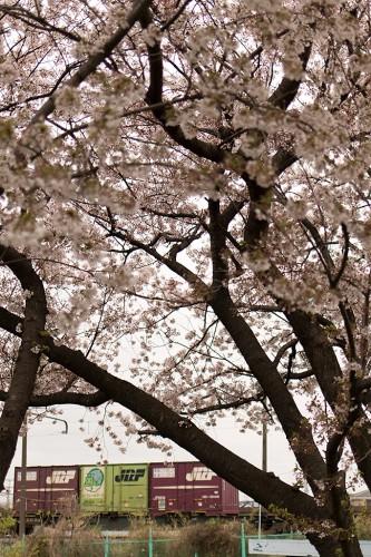 2015.4.4 6:32撮影 1093レ 中川橋梁