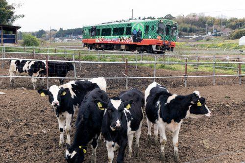 牛と真岡鉄道
