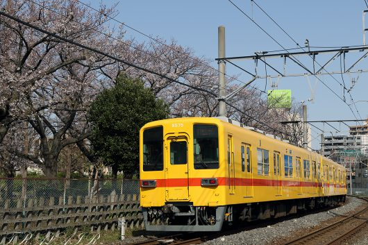 8000系 黄色