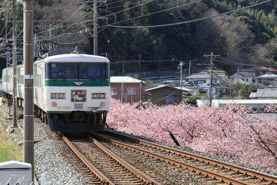 踊り子5号と河津桜